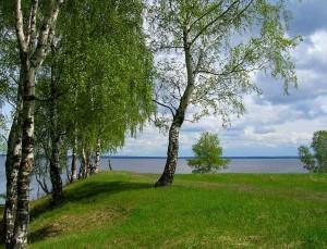 деревотерапия