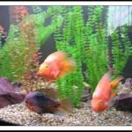 рыбки против стресса