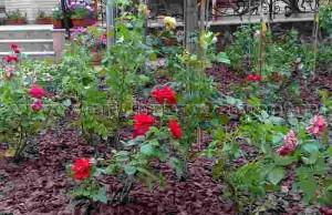 укрытие для роз