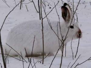 защитить сад от зайцев