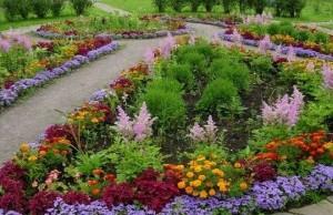 декоративные растения, цветочное оформление,